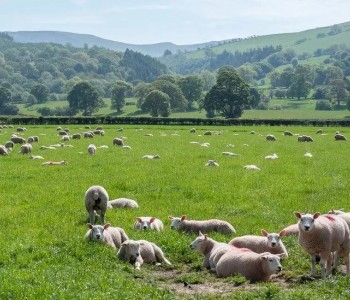 英国农民家庭用牛粪为加密货币采矿供应可再生能源