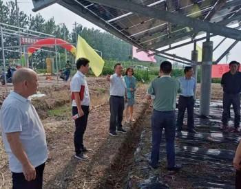 打造光伏农业新模式,林洋能源召开光伏基地种植技术试验项目启动会