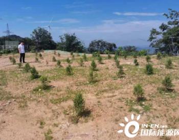 湖北广水市林业局启动风电项目生态修复中期检查工作