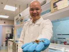 科学家们正在将罗望子壳转化为EV的<em>储能材料</em>