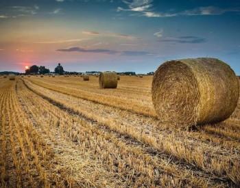 生物质能源助推碳中和+乡村振兴战略落实
