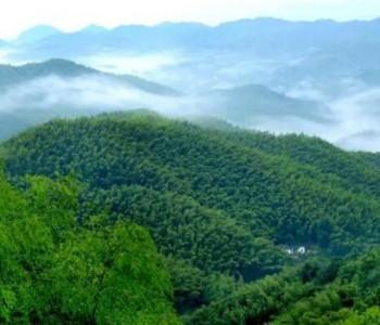 如何利用森林帮助减排?种树只是第一步