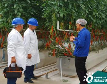 国网甘肃电力电能替代助力现代化无土栽培