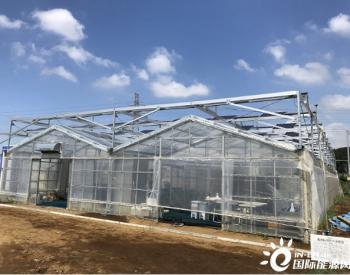 晶科能源丨日本最先进的光储无人管理农业大棚
