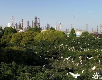 中国石化:节能低碳 争做生态文明建设的践行者
