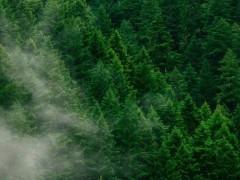 聚合物膜:降低绿氢成本的关键