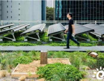 植物提升光伏组件效率3.63%