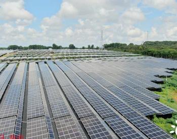 海南海口:农光互补,助农增收