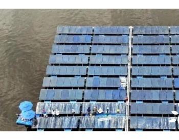 """韩国<em>太阳能发电项目</em>遭""""鸟粪困扰"""":驱不驱鸟都是大问题"""