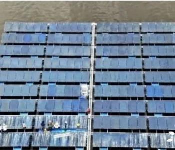 """韩国太阳能电站遭""""鸟粪困扰"""":驱不驱鸟都是大问题"""