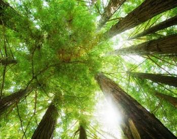 山西将组织建立碳减排项目库 征集范围为本省境内实施的可再生能源等项目