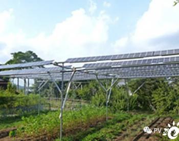 """农作物生产与<em>太阳能发电</em>一举两得的""""农光发电"""""""