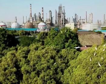 """赵东:中国石化聚焦""""双碳""""目标打造绿色能源企"""