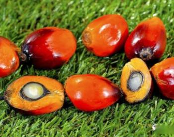 德国将从2023年起在生物柴油生产中停止使用棕榈油