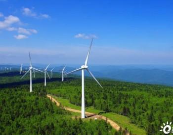 风电与生物多样性,其中的奥秘你知多少?