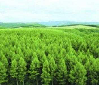 江西省发布林业碳汇交易规则(试行)(征求意见稿)