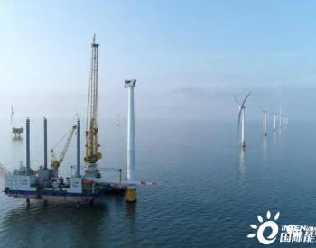 海洋经济生态圈:海上风电+海洋牧场